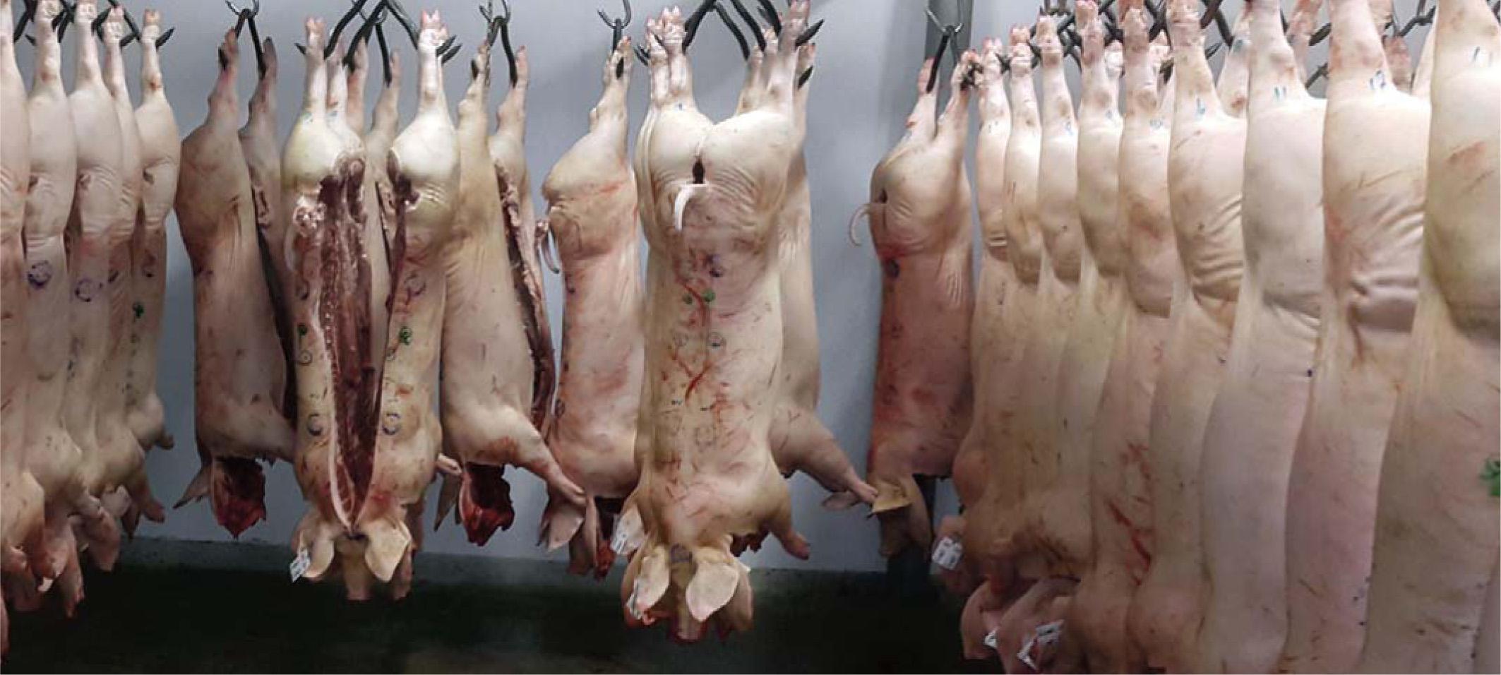 Novedades legislativas en torno a la clasificación de canales en mataderos
