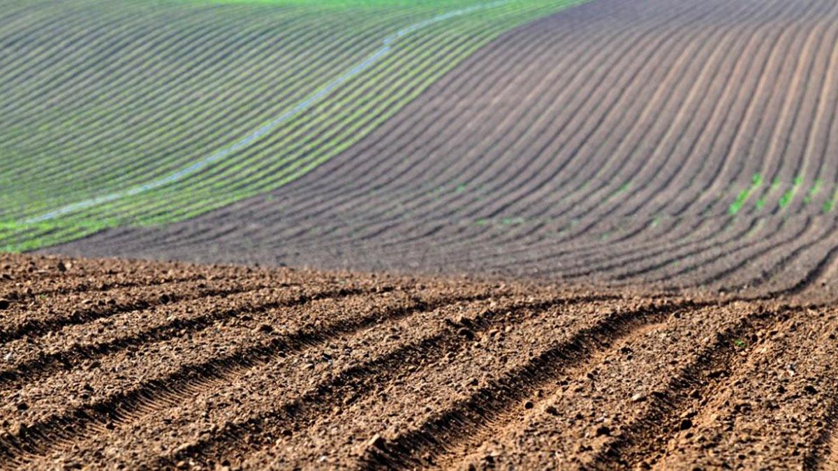 El sector agroalimentario responde eficazmente frente al Covid-19